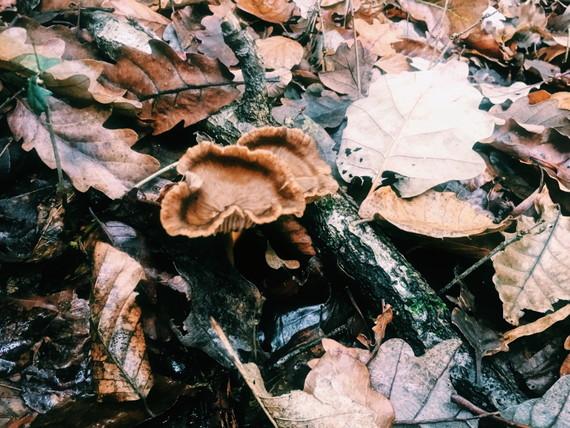 フランスの秋の風物詩「きのこ狩り」