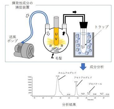 <論文タイトル><br /> Identification and Quantification of Short-Chain Aldehydes Generated from Hair by Ultraviolet<br /> Ray Irradiation<br /> 紫外線照射により毛髪から発生する短鎖アルデヒド類の同定および定量<br />